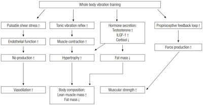 Effects of whole body vibration training on body composition